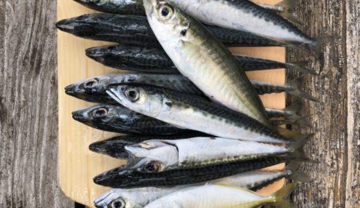 【春のサビキ祭り】千葉県外房の海で食料調達
