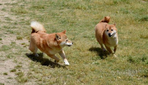 【楽しさ倍増】愛犬とキャンプにいこう!