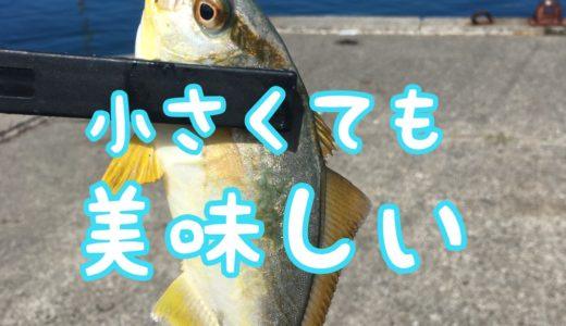 【釣りキャンプ】青物を釣って豪華なキャンプ飯を食べよう!