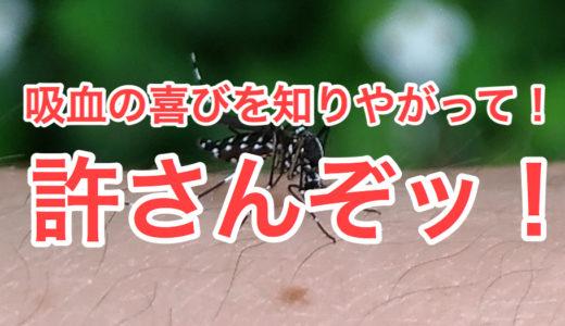 【夏】蚊のいないキャンプ場を探す方法【虫対策】